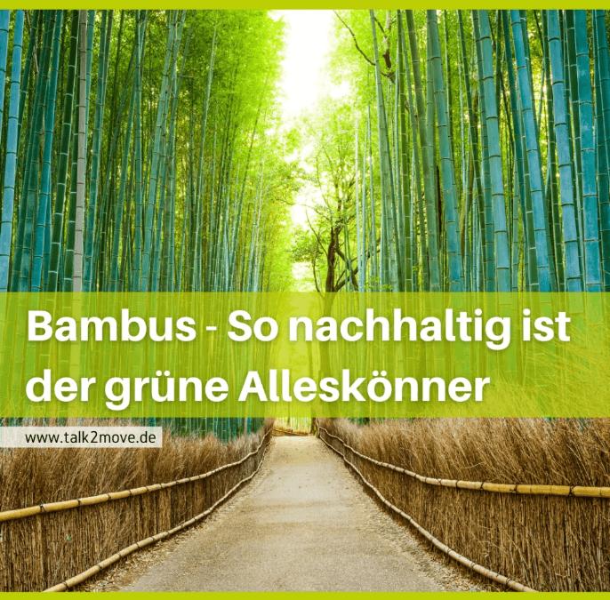 talk2move Blog - Bambus - so nachhaltig ist der grüne Alleskönner