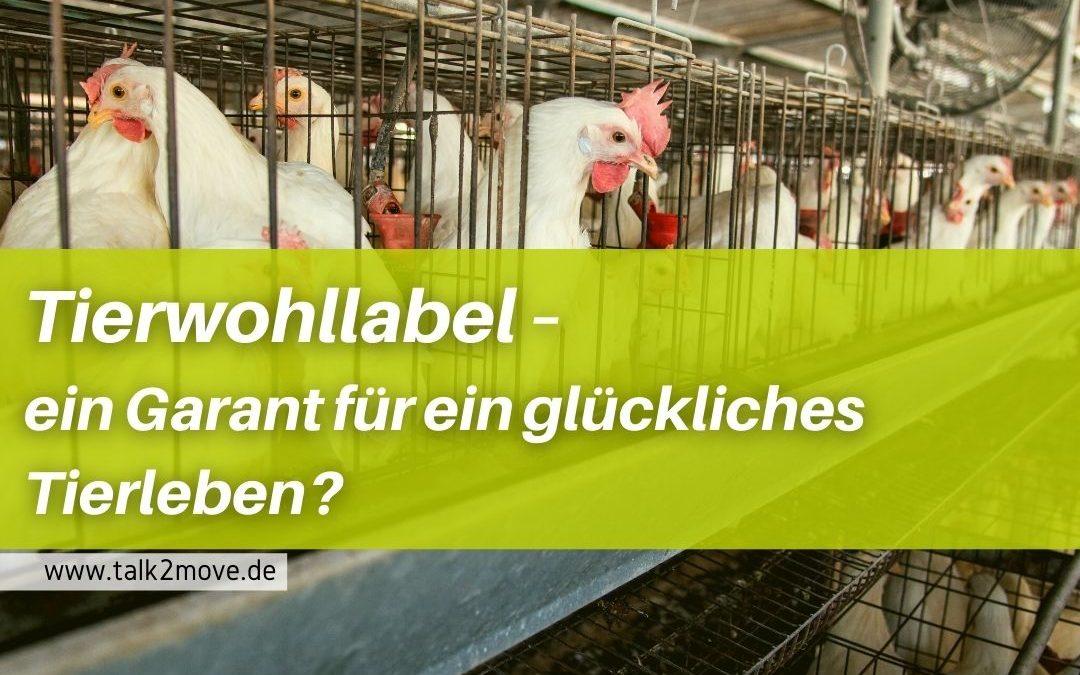 Tierwohllabel - ein Garant für ein glückliches Tierleben?