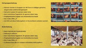Hühner - Haltungsformen 1 und 2