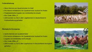 Hühner - Haltungsformen 3 und 4