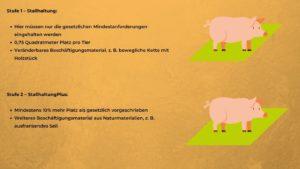 Schwein - Haltungsformen 1 und 2